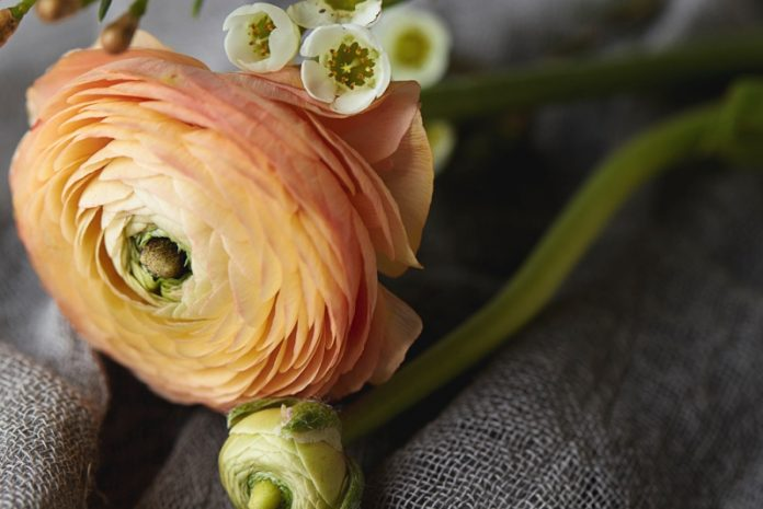 florarie-online (1)